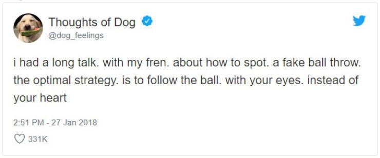 """Funny tweet from 'Thoughts of Dog' that reads, """"i had a long talk. with my fren. about how to spot. a fake ball throw. the optimal strategy. is to follow the ball. with your eyes. instead of your heart"""""""