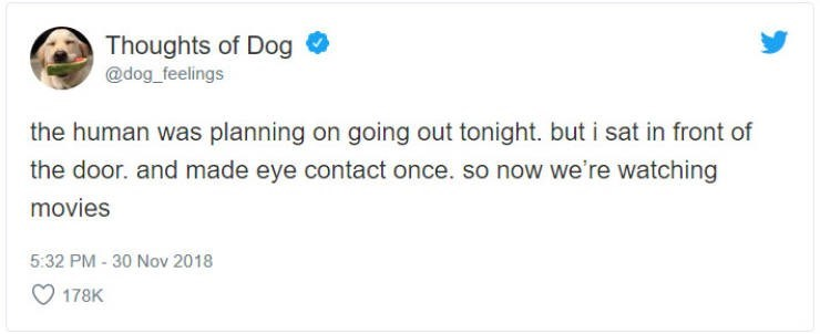 """Funny tweet from 'Thoughts of Dog' that reads, """"The human was planning on going out tonight. but i sat in front of the door. and made eye contact once. so now we're watching movies"""""""
