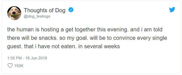 Text - Thoughts of Dog @dog_feelings the human is hosting a get together this evening. and i am told there will be snacks. so my goal. will be to convince every single guest. that i have not eaten. in several weeks 1:55 PM- 16 Jun 2018 193K