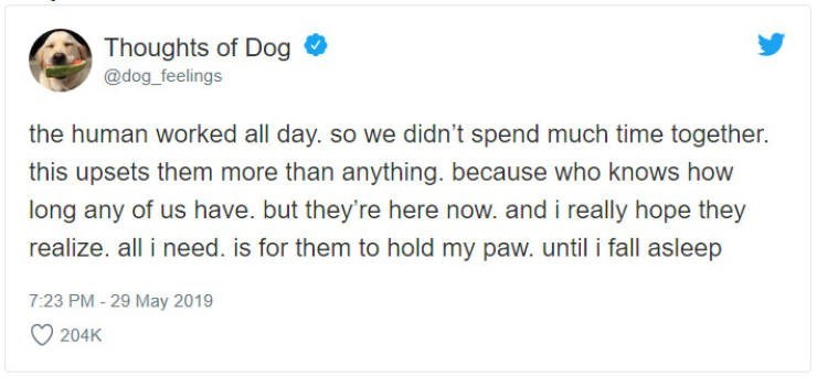 Text - Thoughts of Dog @dog_feelings the human worked all day. so we didn't spend much time together. this upsets them more than anything. because who knows how long any of us have. but they're here now. and i really hope they realize. all i need. is for them to hold my paw. until i fall asleep 7:23 PM-29 May 2019 204K