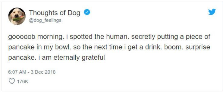 Text - Thoughts of Dog @dog_feelings gooooob morning. i spotted the human. secretly putting a piece of pancake in my bowl. so the next time i get a drink. boom. surprise pancake. i am eternally grateful 6:07 AM 3 Dec 2018 176K