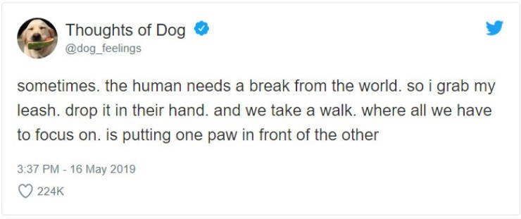 Text - Thoughts of Dog @dog feelings sometimes. the human needs a break from the world. so i grab my leash. drop it in their hand. and we take a walk. where all we have to focus on. is putting one paw in front of the other 3:37 PM-16 May 2019 224K