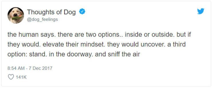 Text - Thoughts of Dog @dog_feelings the human says. there are two options.. inside or outside. but if they would. elevate their mindset. they would uncover. a third option: stand. in the doorway. and sniff the air 8:54 AM -7 Dec 2017 141K