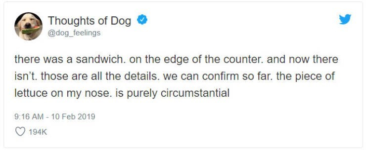 Text - Thoughts of Dog @dog_feelings there was a sandwich. on the edge of the counter. and now there isn't. those are all the details. we can confirm so far. the piece of lettuce on my nose. is purely circumstantial 9:16 AM -10 Feb 2019 194K