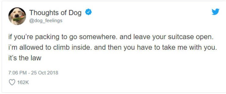 Text - Thoughts of Dog @dog_feelings if you're packing to go somewhere. and leave your suitcase open. i'm allowed to climb inside. and then you have to take me with you. it's the law 7:06 PM-25 Oct 2018 162K