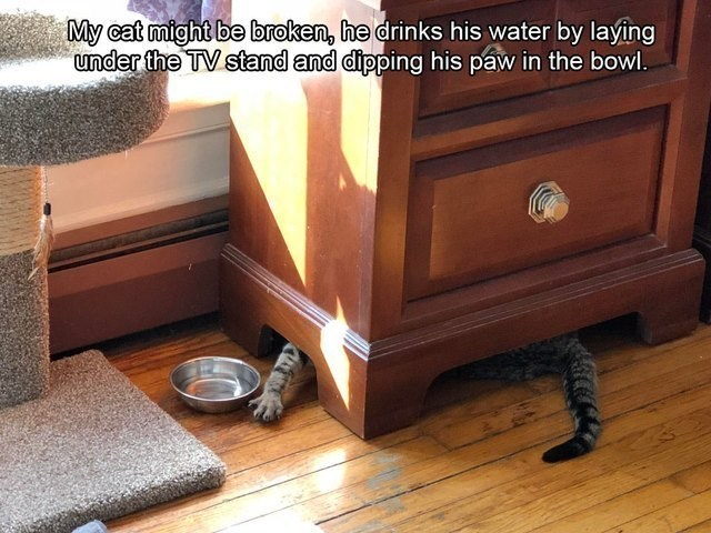 Furniture - My cat might be broken, he drinks his water by laying under the TV stand and dipping his páw in the bowl.
