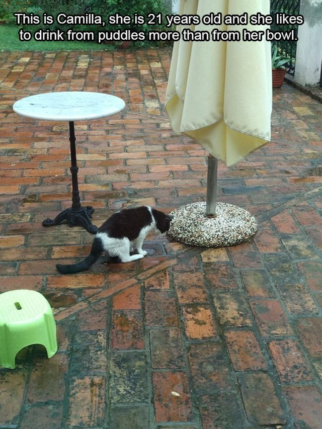 Cat - This is Camilla, she is 21 years old and she likes to drink from puddles more than from her bowl.