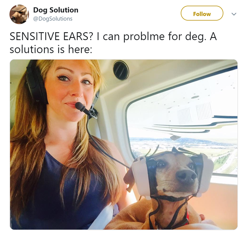 Nose - Dog Solution @DogSolutions Follow SENSITIVE EARS? I can problme for deg. A solutions is here: