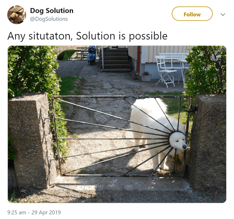 Yard - Dog Solution Follow @DogSolutions Any situtaton, Solution is possible 9:25 am 29 Apr 2019