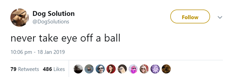 Font - Dog Solution @DogSolutions Follow never take eye off a ball 10:06 pm 18 Jan 2019 79 Retweets 486 Likes