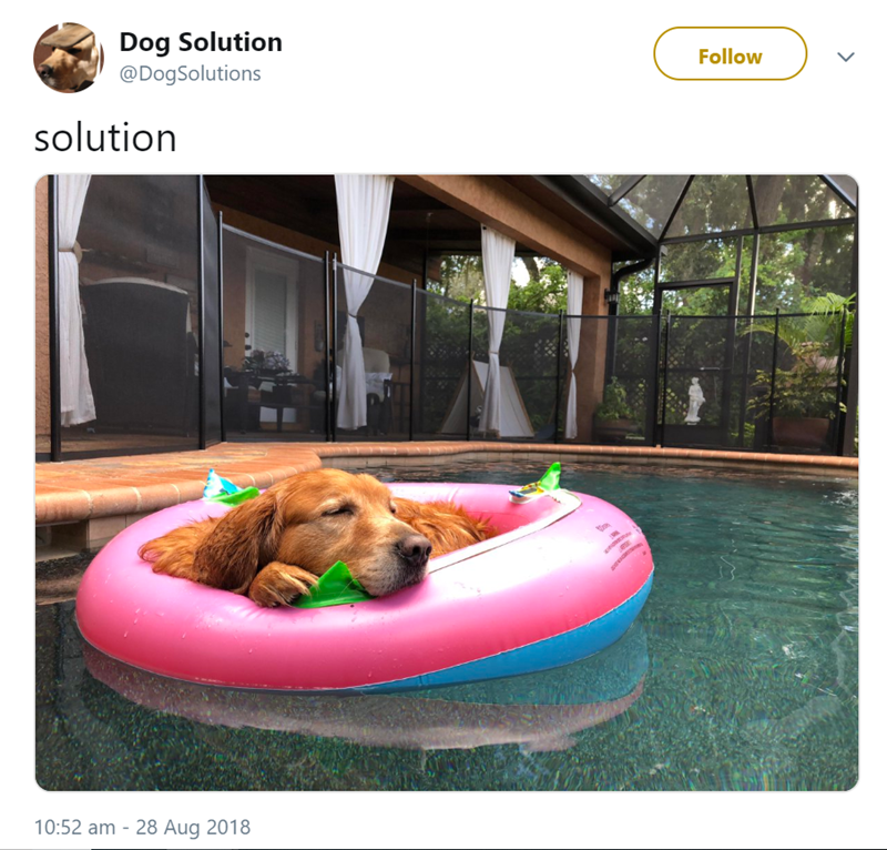 Dog - Dog Solution @DogSolutions Follow solution 10:52 am 28 Aug 2018