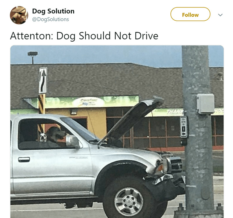 Vehicle - Dog Solution @DogSolutions Follow Attenton: Dog Should Not Drive THAN