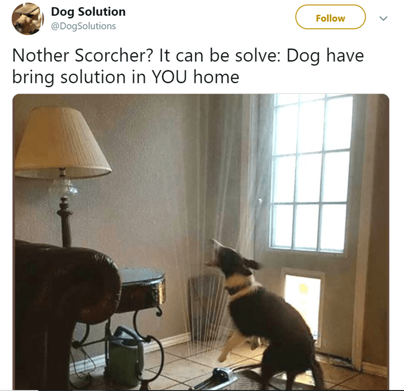 Lighting accessory - Dog Solution @DogSolutions Follow Nother Scorcher? It can be solve: Dog have bring solution in YOU home