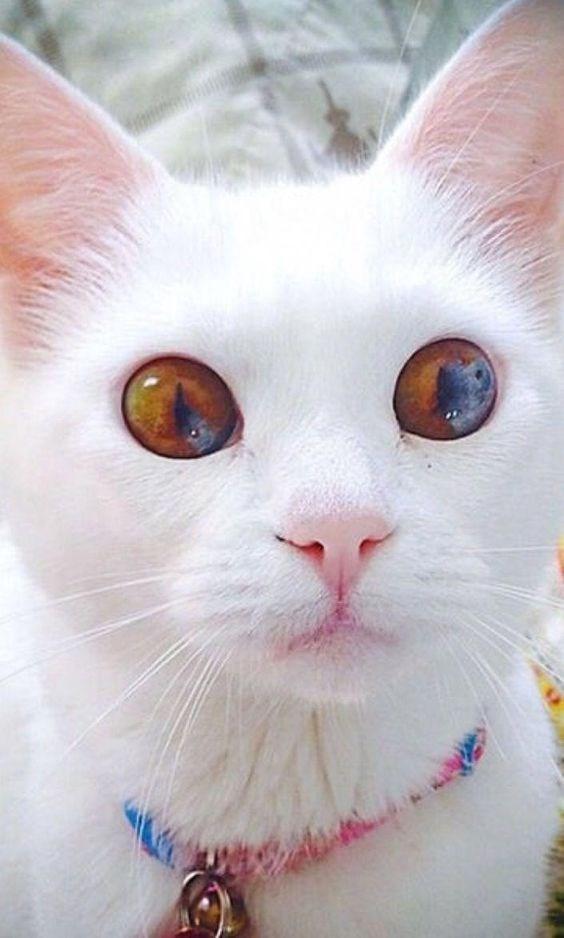 hypnotic cat eyes