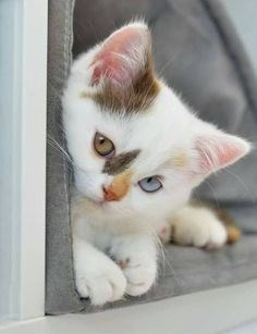 shy cat with cool eyes