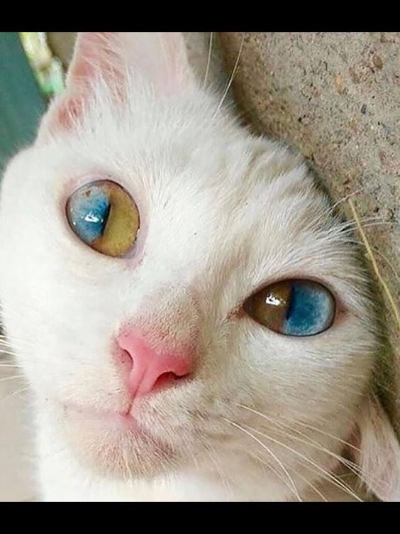 very trippy cat eyes