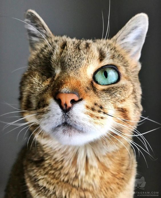 1 eyed - Cat - STAGRAM.COM ICATSOPINSTAGRAM