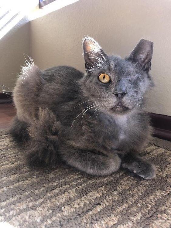 1 eyed - Cat - ww