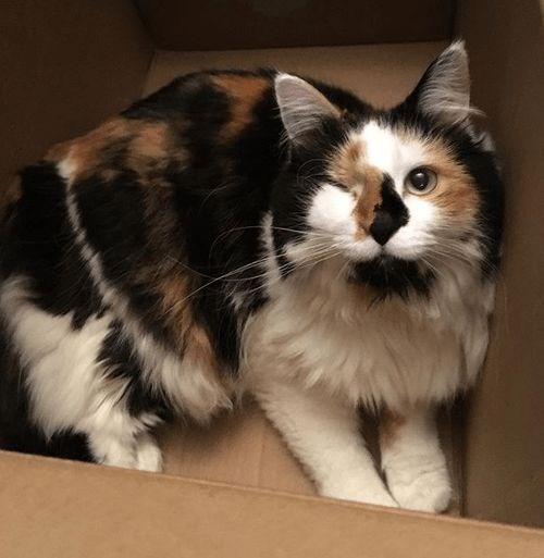 1 eyed - Cat