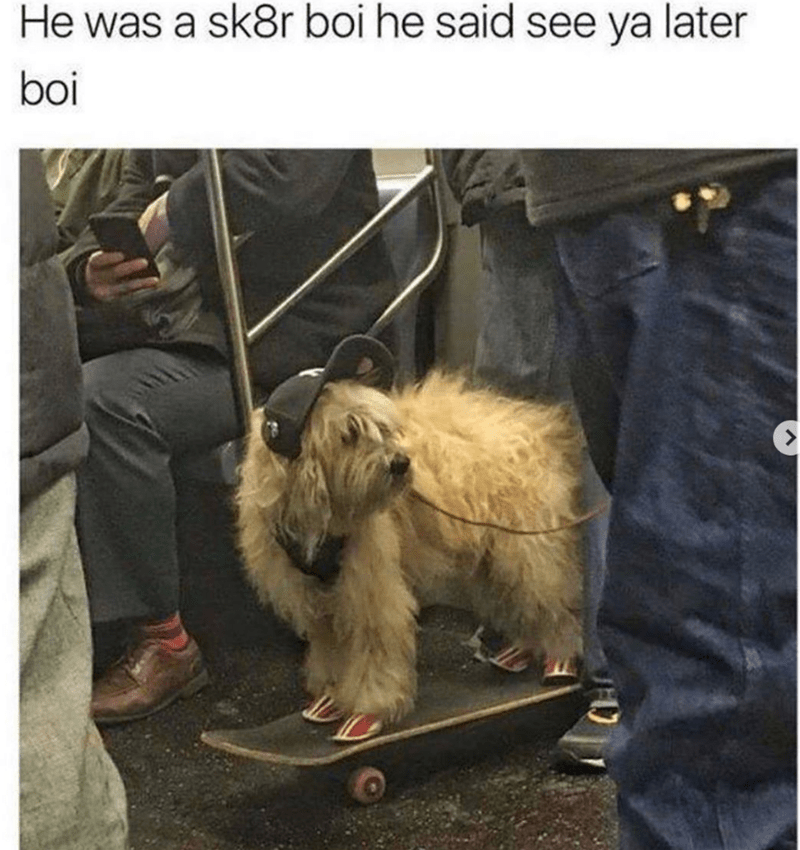 meme of a dog on a skateboard on the subway wearing headphones and a cap