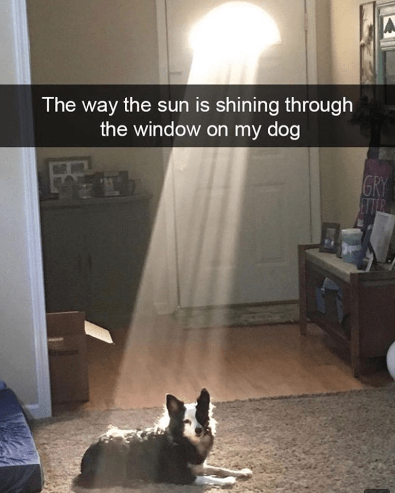 Pembroke welsh corgi - The way the sun is shining through the window on my dog GRY ETTER