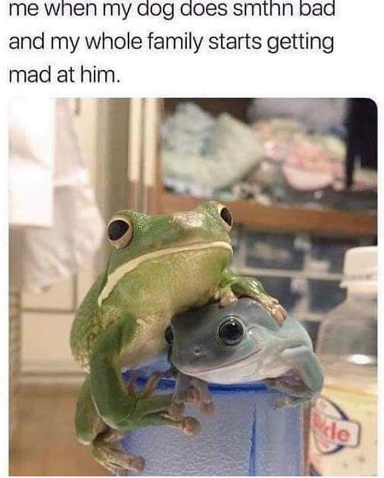 Frog - me when my dog does smthn bad and my whole family starts getting mad at him. le