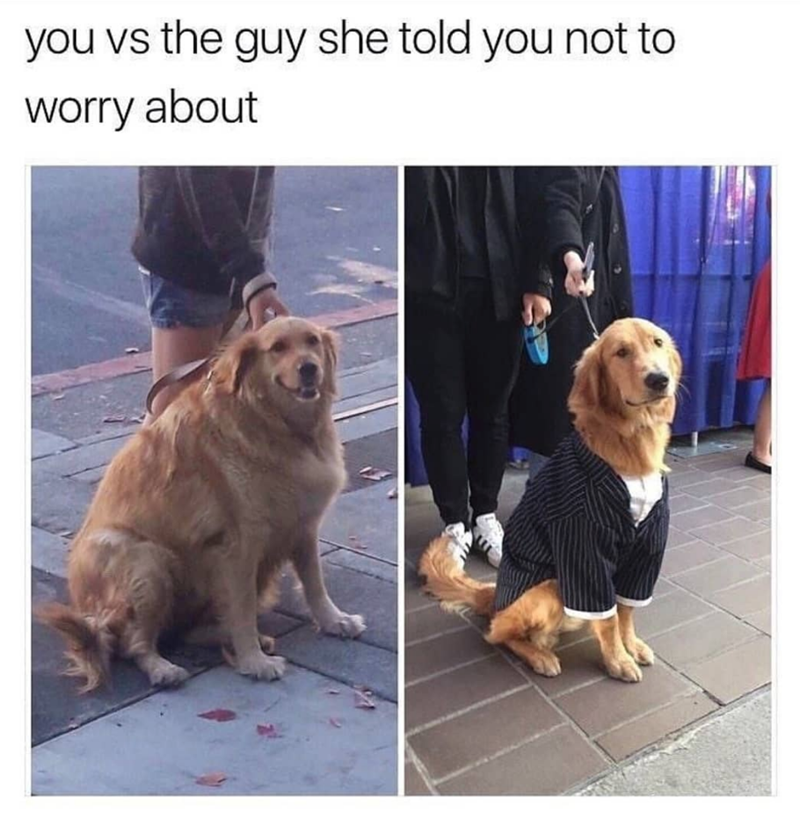 Dog - you vs the guy she told you not to worry about