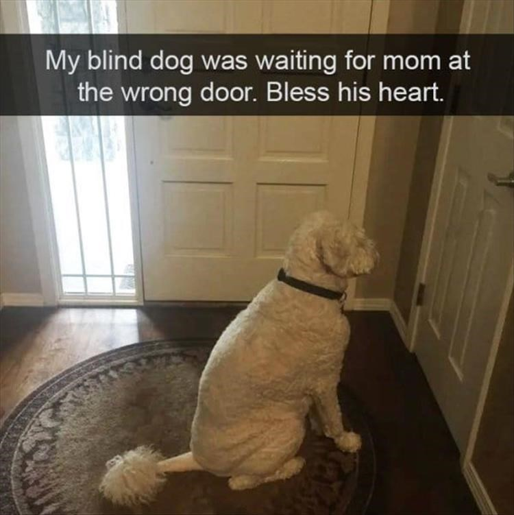 Dog - My blind dog was waiting for mom at the wrong door. Bless his heart.