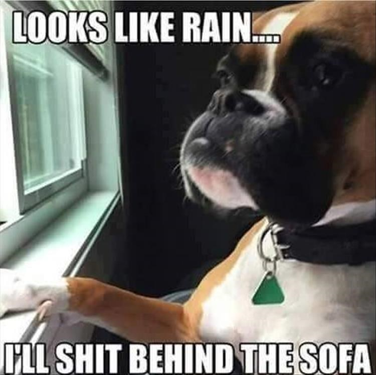 Dog - LOOKS LIKE RAIN HLL SHIT BEHIND THE SOFA
