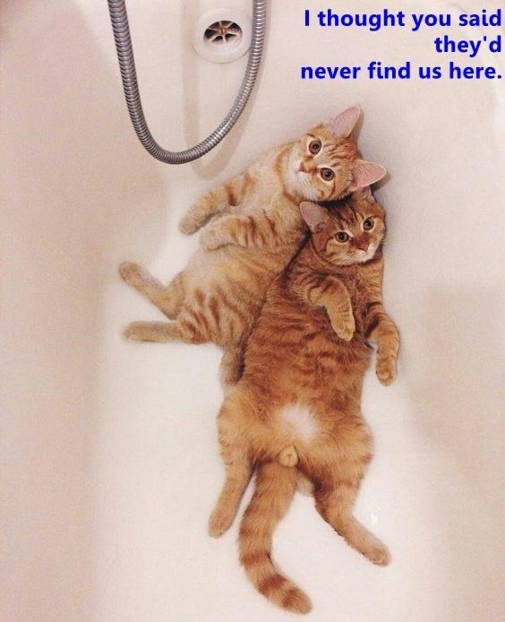 Cat - I thought you said they'd never find us here.