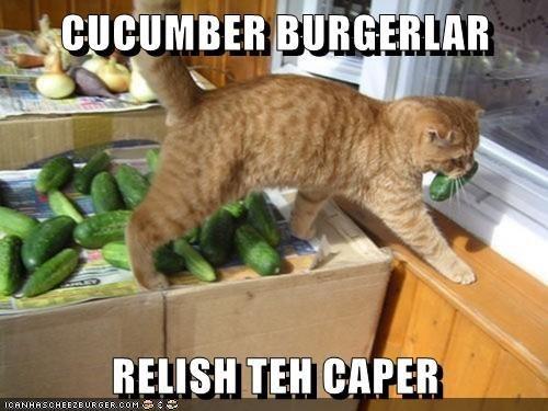 Cat - CUCUMBER BURGERLAR RELISH TEH CAPER ICANHASCHEE2EURGER cOM