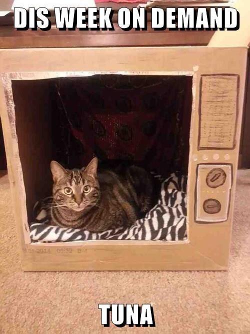 Cat - DIS WEEK ON DEMAND Mono01 0032 TUNA