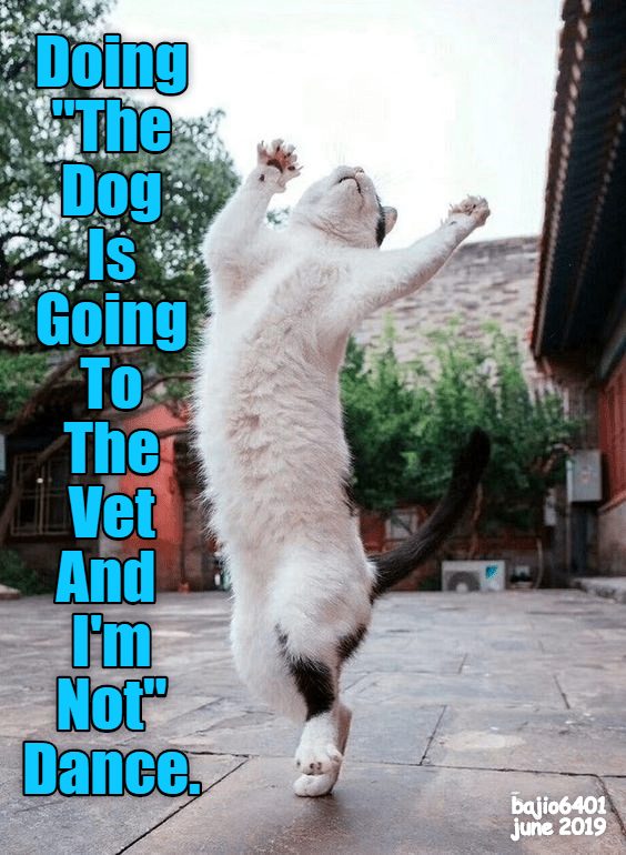 Photo caption - Doing The Dog Is Going To The Vet And Not Dance bajio6401 june 2019