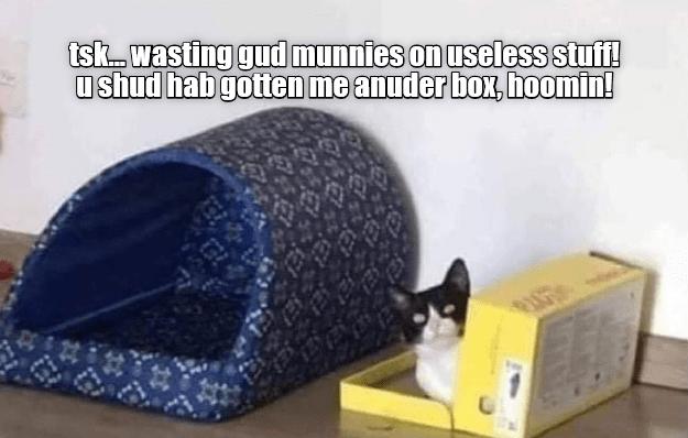 Cat furniture - tsk...wasting gud munnies on useless stuff! ushud hab gotten me anuder box, hoomin!