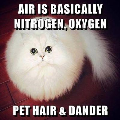 Cat - AIR IS BASICALLY NITROGEN OXYGEN PET HAIR & DANDER