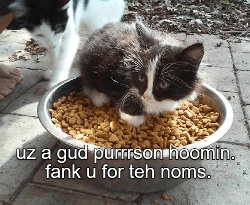 Cat - uz a gud purnrson hoomin. fank u for teh noms.
