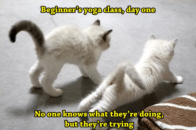 Cat - Beginner's yoga dass, day one No one knows what they're doing, but they're trying