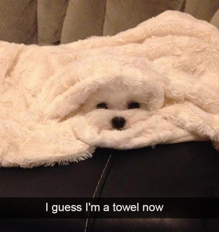 dogs snapchat towel cute - 9317857792