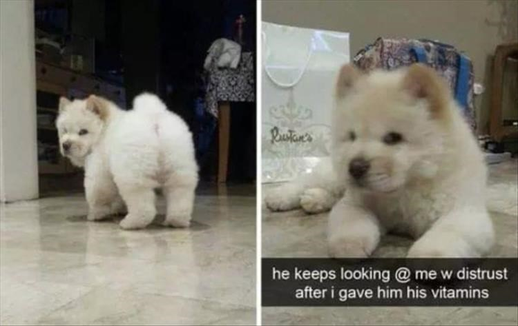 dogs snapchat cute funny - 9317859072