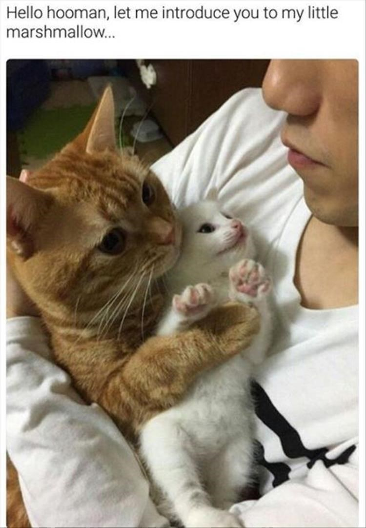 cute cat and kitten cuddling with their human