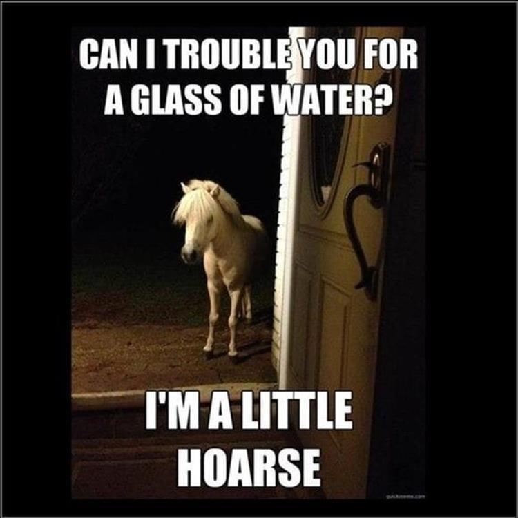 cute Memes funny horse - 9317864192