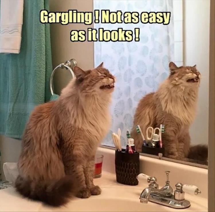 cat memes - Cat - Gargling!Notas easy asitlooks! Nogf