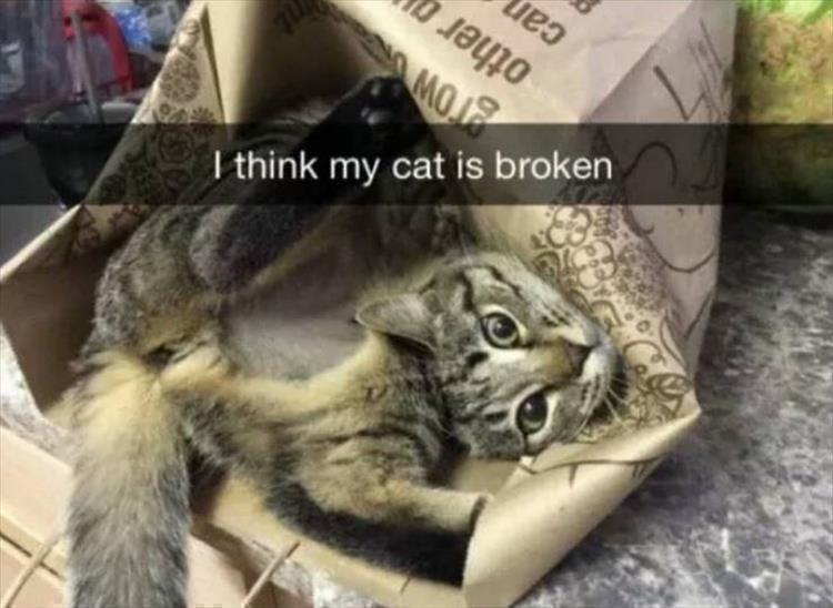cat memes - Mammal - I think my cat is broken other ca