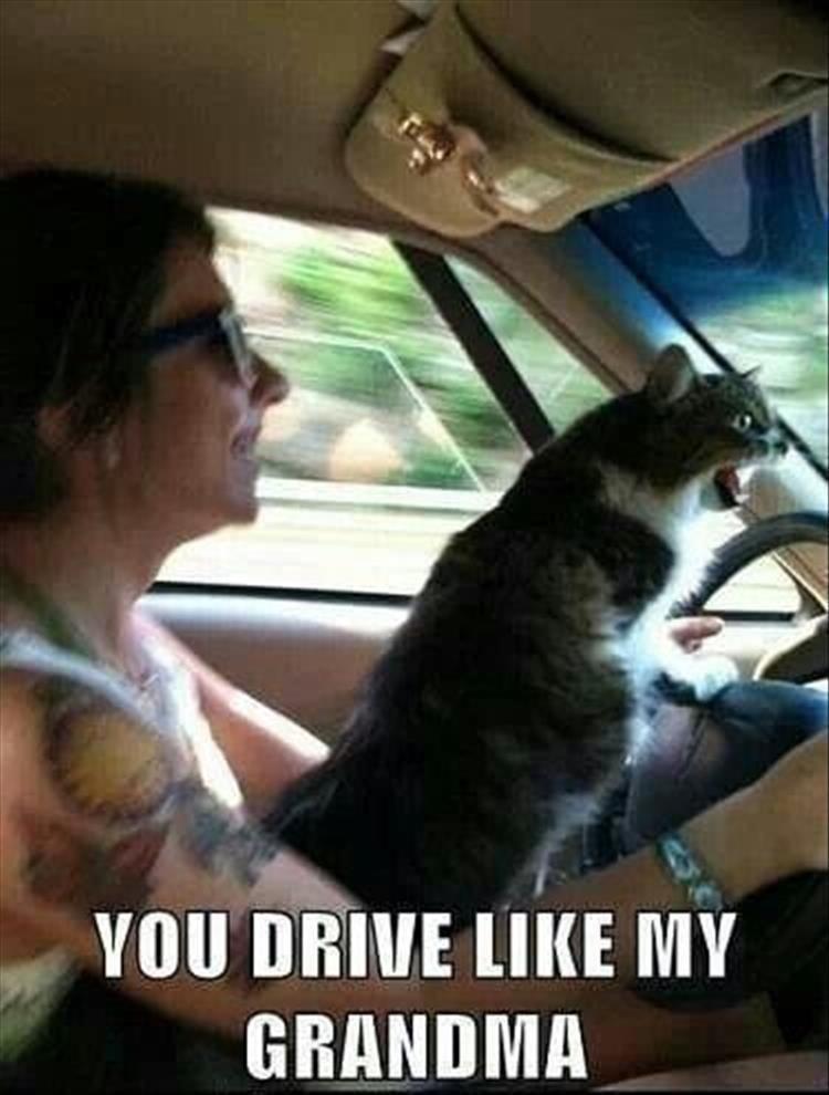 cat memes - Photo caption - VOU DRIVE LIKE MY GRANDMA