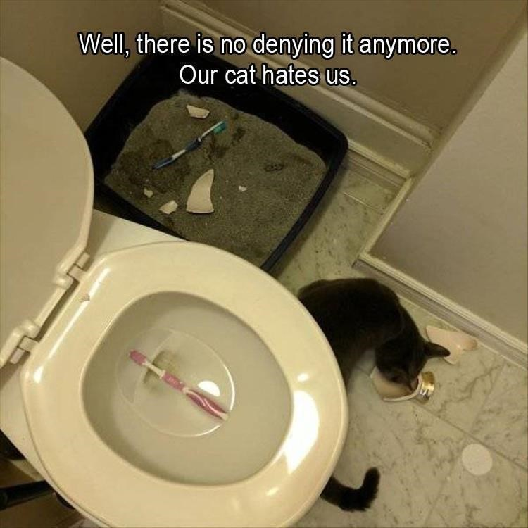 cat memes - Toilet seat - Well, there is no denying it anymore. Our cat hates us.
