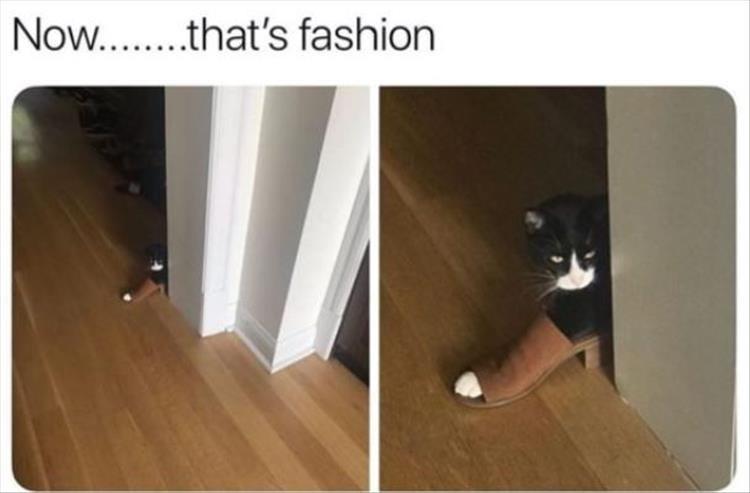 cat memes - Floor - Now... .that's fashion