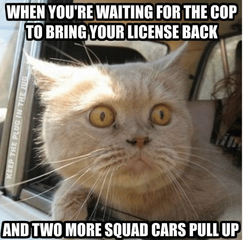 cat memes - Cat - WHEN YOU'RE WAITING FOR THE COP TO BRING YOUR LICENSE BACK 0 AND TWO MORE SQUAD CARS PULL UP KEEP THE PLUG IN THE TUG