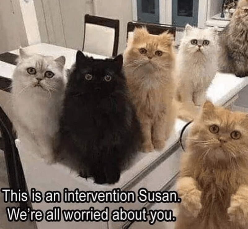 cat memes - Cat - This is an intervention Susan, We're all worried about you.