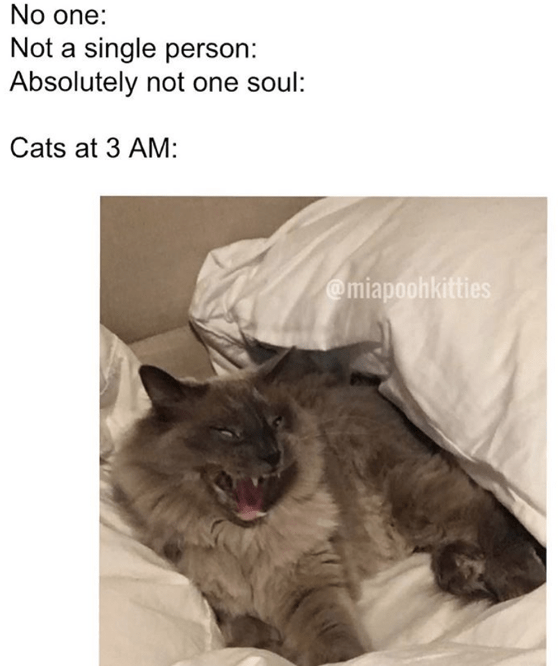 cat memes - Cat - No one: Not a single person: Absolutely not one soul: Cats at 3 AM: @miapoohkitties