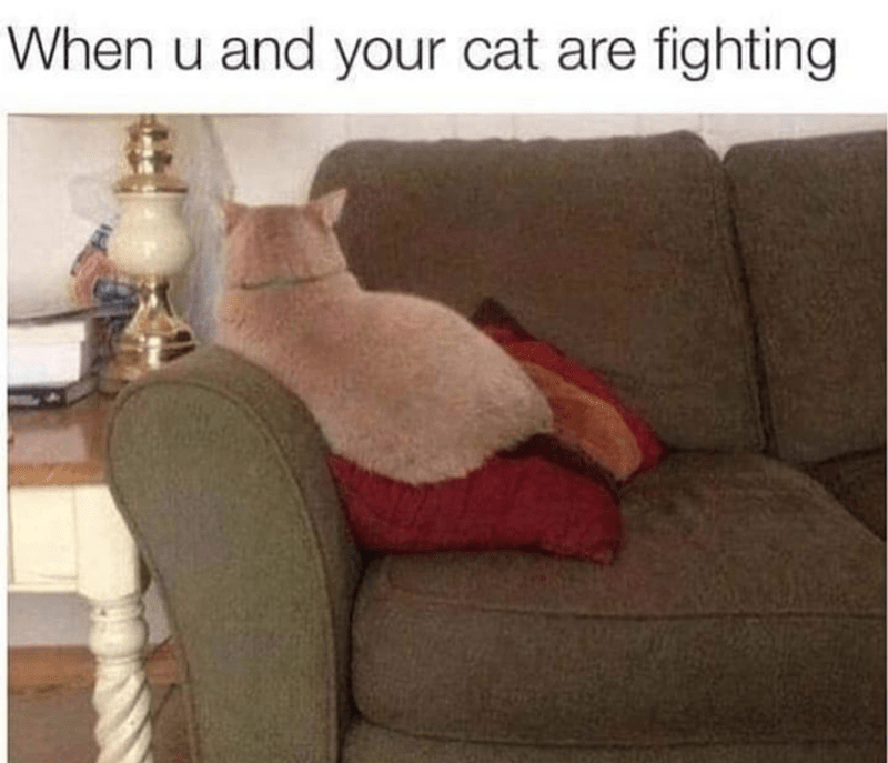 cat memes - Furniture - When u and your cat are fighting